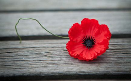 Rotary clubs support Remembrance Day