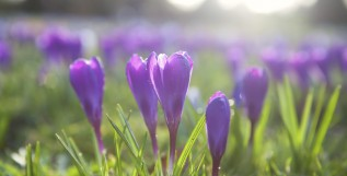 Purple4Polio