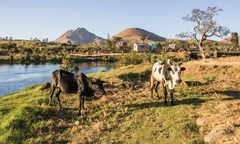 Lush farmland for Madagascar community after providing clean water