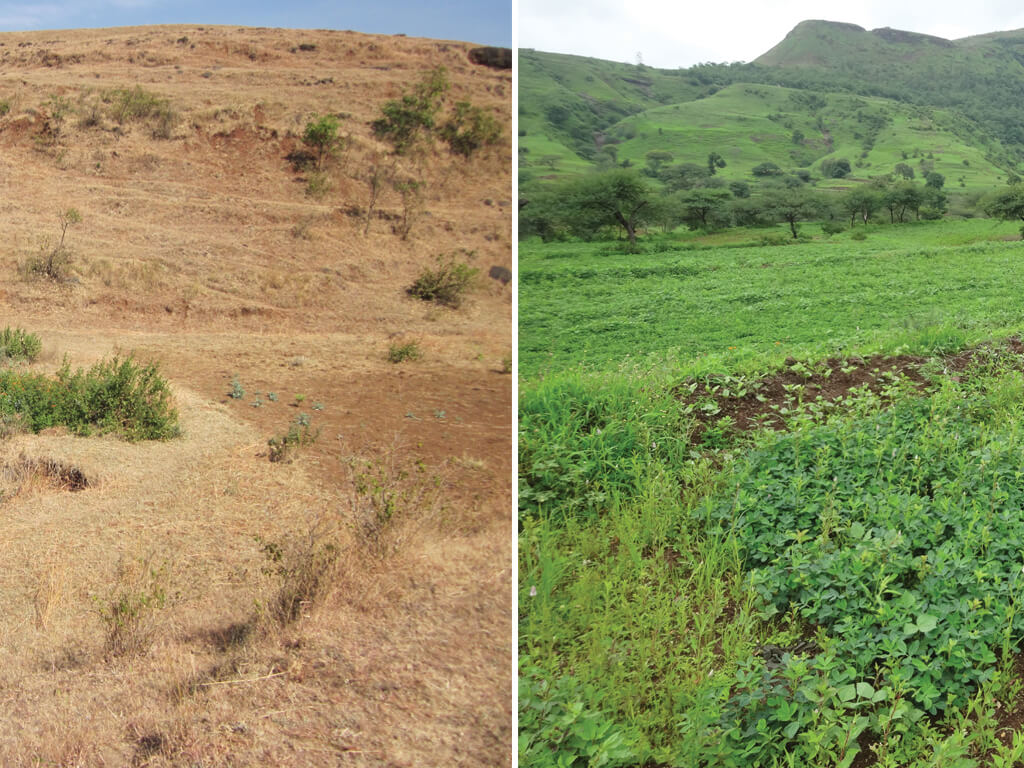 Green shoots of recovery - region before and after