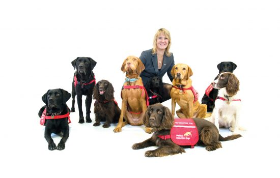 medical detection dogs charity fighting disease