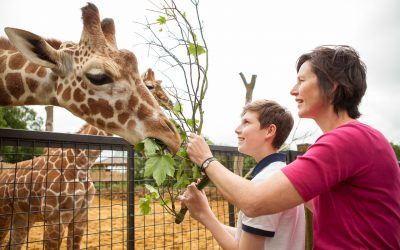 boy and mother feed giraffe rotary funded zoo trip
