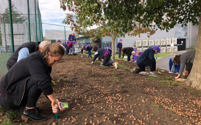crocus planting world polio day