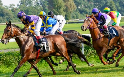 horse racing racecourse field competition bets