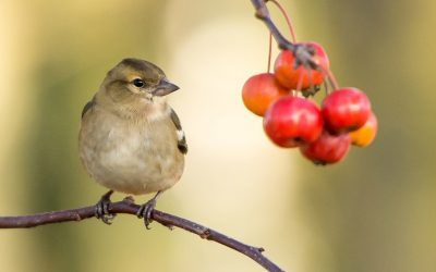 rotary young photographer small bird berry